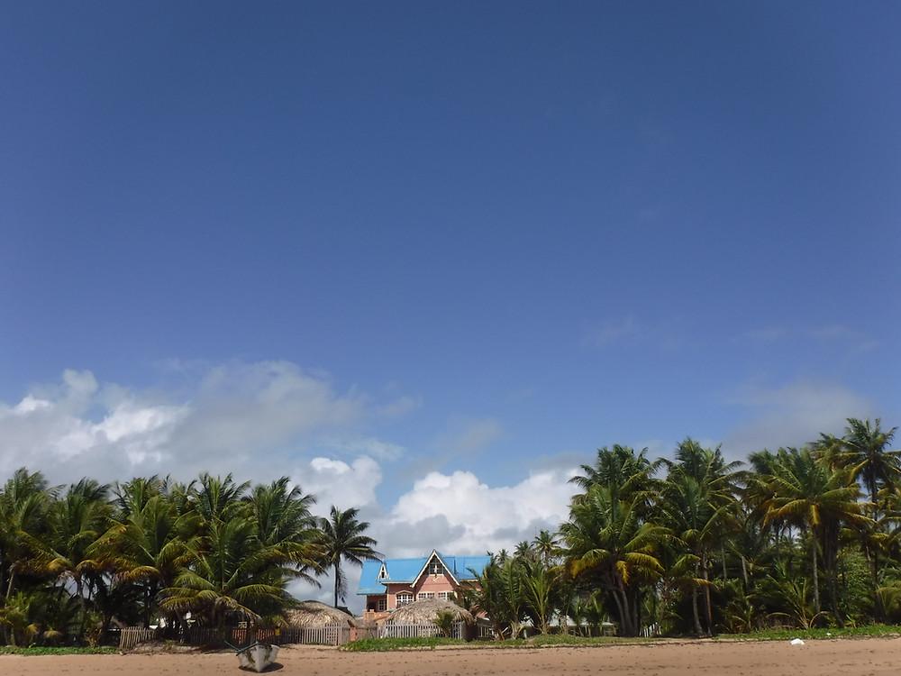 Kokosnusspalem stehen auf Trinidad und Tobago