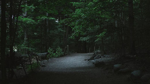 forest-path-at-night.jpg