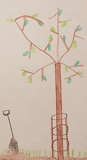 Baumzeichnung.png