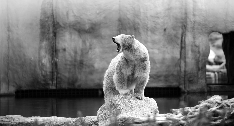 Polar Bear 4_edited.jpg