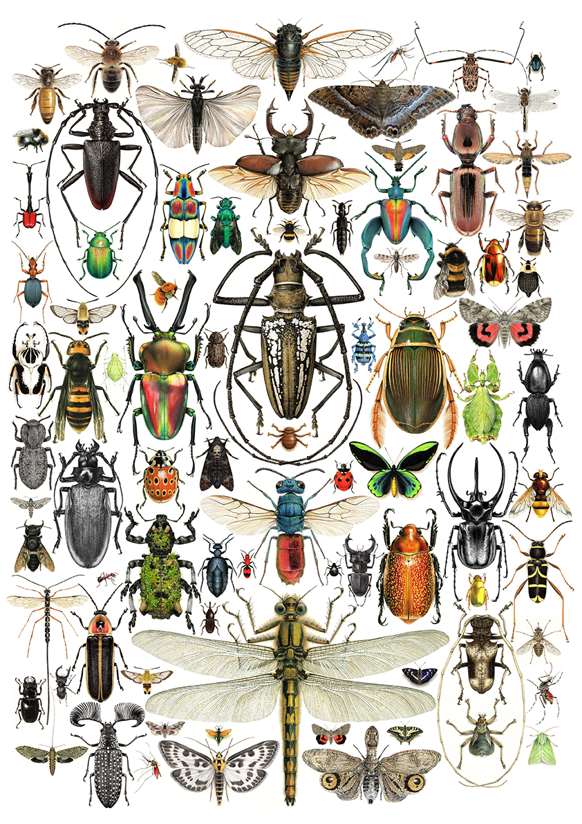 Insect Compilation