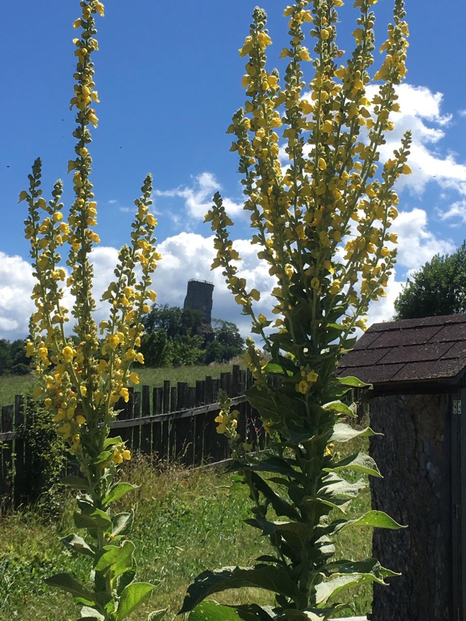 Bienentankstelle mit Ruinenblick