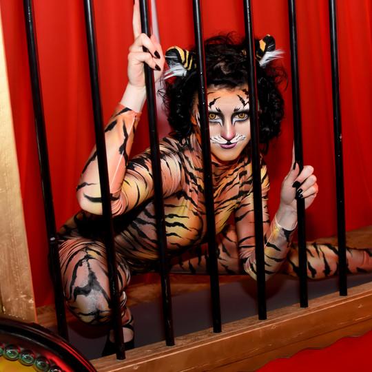 Circus Contortion Cat