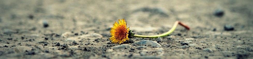 flower-1812470_1280_edited.jpg