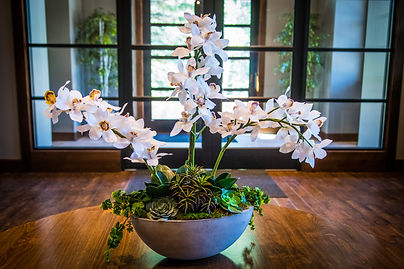 White orchid w_succulents .jpg