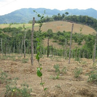 COLOMBIA- Passion Fruit & Orange