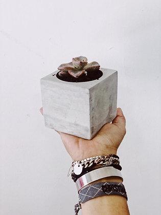 סוקולנטים, מיני בטון