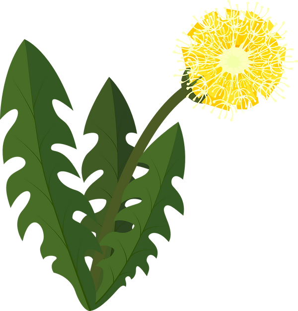 Dand w flower and pappus smaller.png