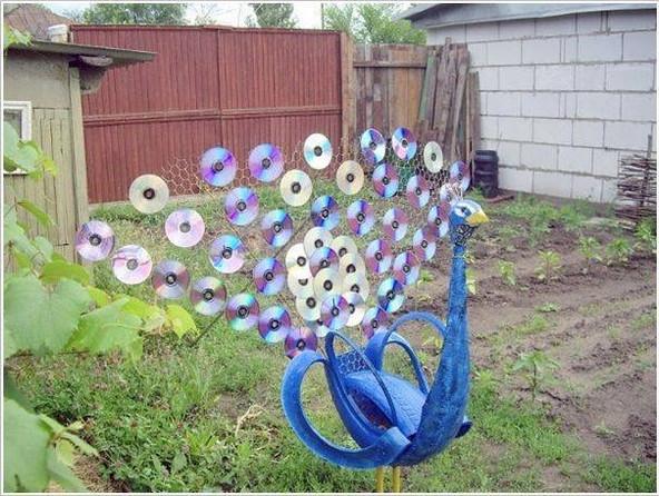 CD peacock