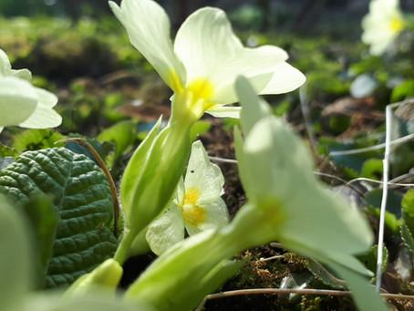 Springtime in Hungary: macro focus activity
