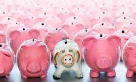 """Pay """"Guinea"""" Pig"""