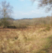 Passfield Common