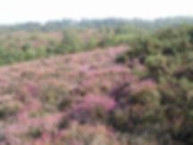 Ludshott Commons