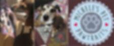 Oskar banner.jpg