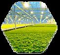 farm_hexagon.png