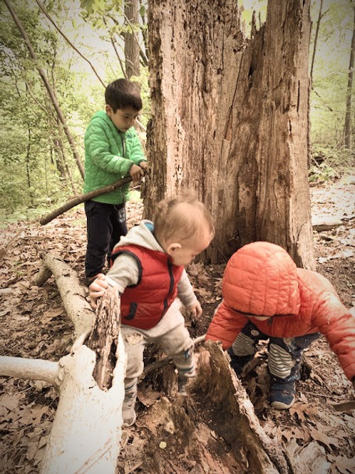 Summer 2021 Nature Camp (July 24 - Aug 28)