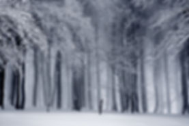 black-and-white-cold-fog-forest-235621.j