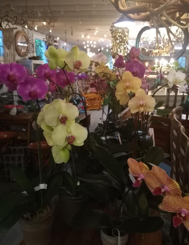 orchid tarpon springs