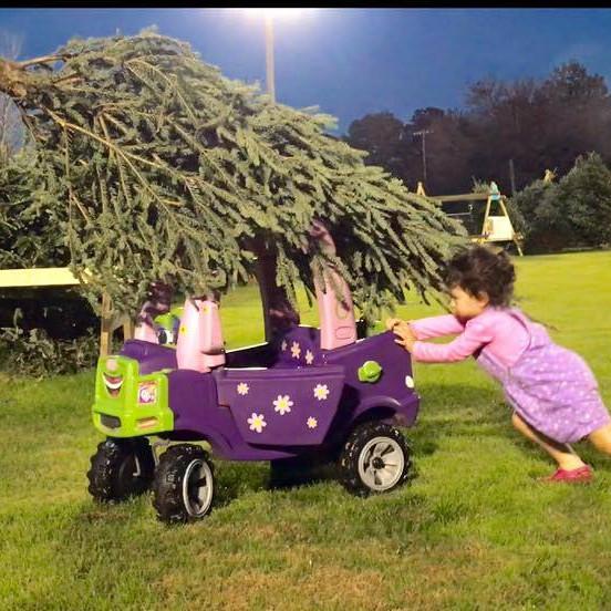 Tree Lot Sales