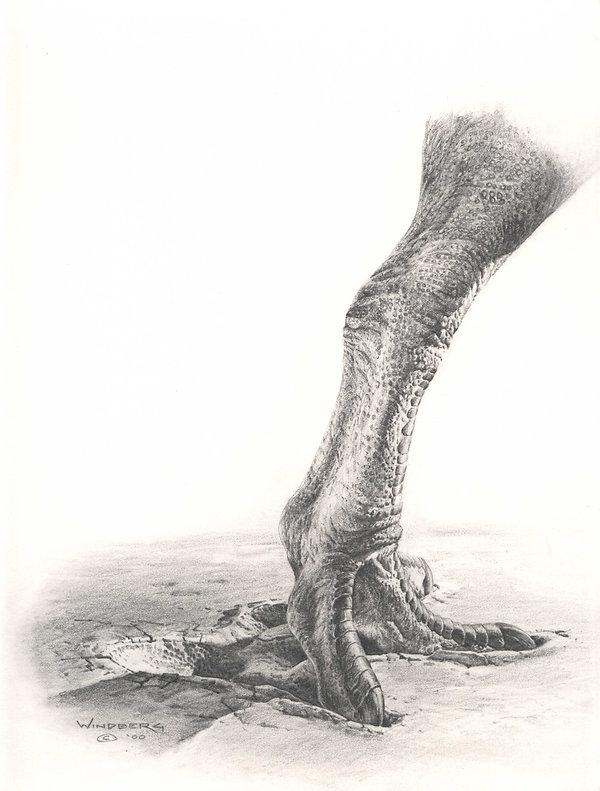 08_Windberg_Megalosauropus.jpg