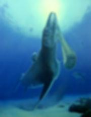 06_Windberg_Cretaceous marine.jpg