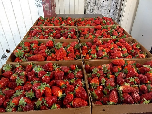 Strawberries, 10 lb flat(s) by PRE-ORDER ONLY