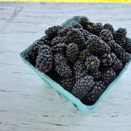 Blackberries quart Fentons Berry Farm.jp