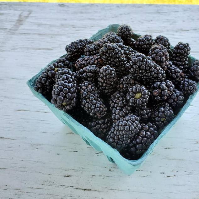 Blackberries quart Fentons Berry Farm.jp