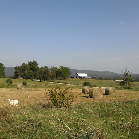 Front field Fentons Berry Farm.jpg