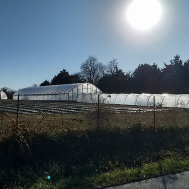 High Tunnels at Fentons Berry Farm.jpg