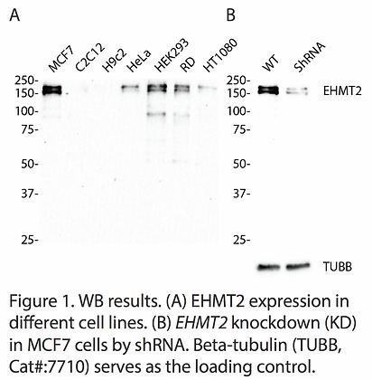 Validated EHMT2 Lentiviral shRNA #V2352