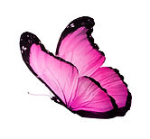 Color butterfly on white background.jpg