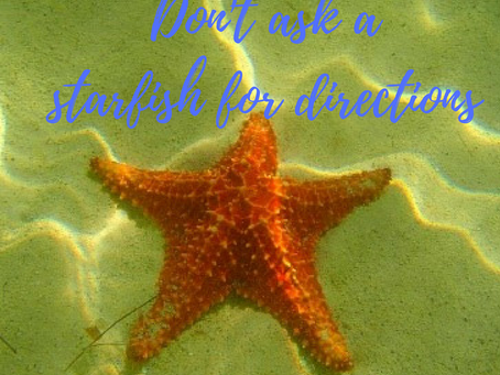 Day 5 ~ Don't Ask A Starfish for Directions
