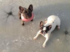 Maggie en Bella