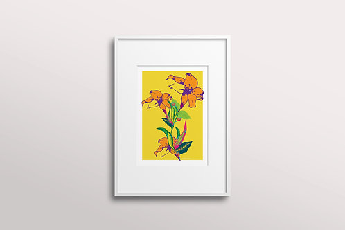 Fuchsia Lilly Art Print in Lemon Bumblebee (Limited Edition)