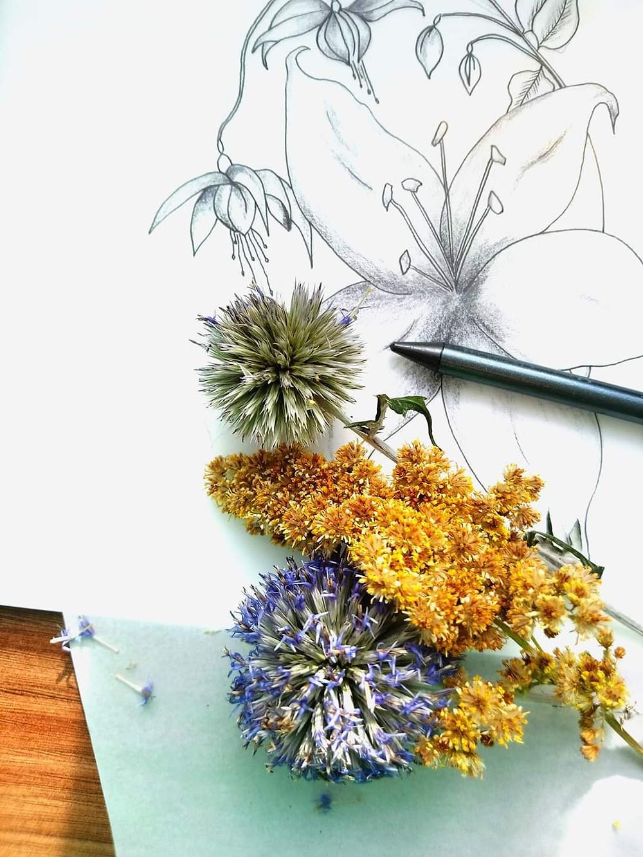 Frantasia Haze Design Sketches