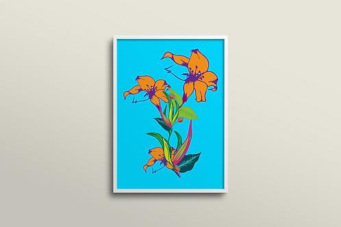 Fuchsia Lilly Art Print in Skylight Summer (Limited Edition)