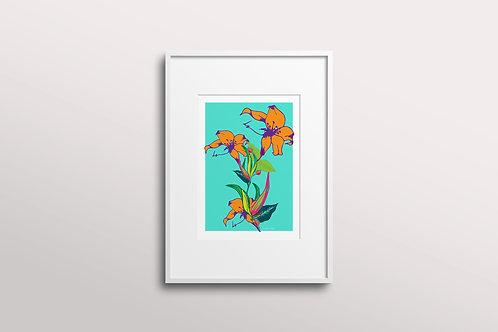 Fuchsia Lilly Giclee Art Print, Maya Tropics