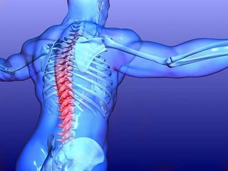 Les différents maux du dos