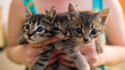 rachel-reels-foster-kittens-2.jpg
