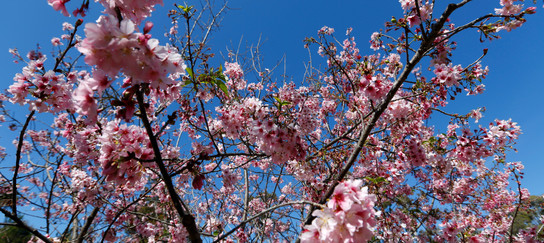 Balboa_Park_Japanese_Friendship_Garden_2