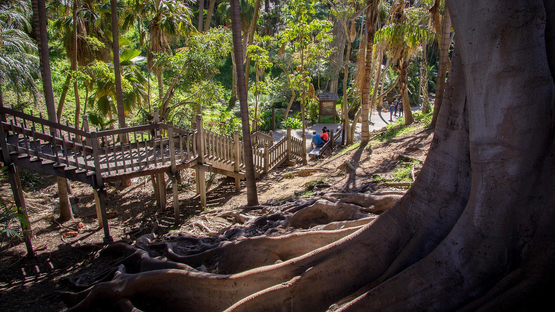 Palm Canyon1.jpg