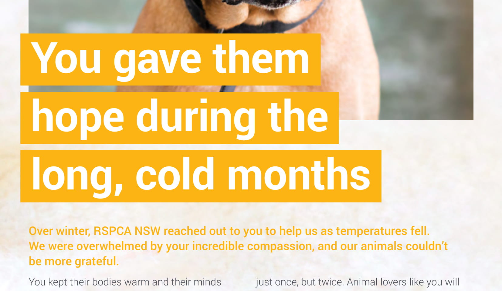 RSPCA NSW / Animal Action Report September