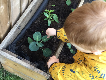 Growing and gardens