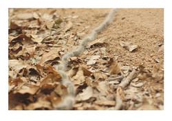 Caterpillars, Sabie Park 2014
