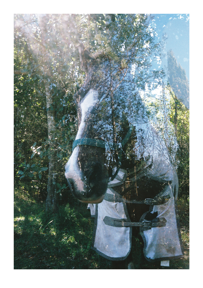 Horse Through Back Window of Tiny Tight Wild Spirit BP 2016