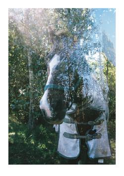 Horse Through Back Window of Tiny Tight Wild Spirit BP 2016
