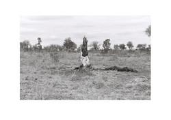 Burnt Bark 1, Kruger Park 2016