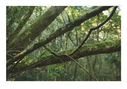 Magic Forest, Wild Spirit BP 2015