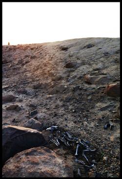 Skeletons in the Desert - Series 02